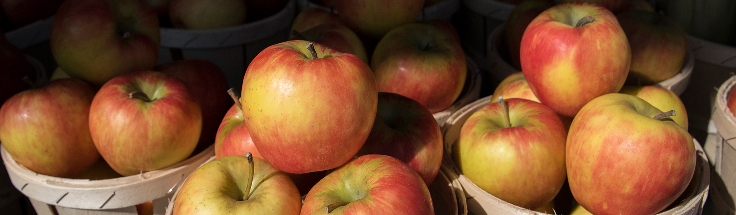New Jersey Apples